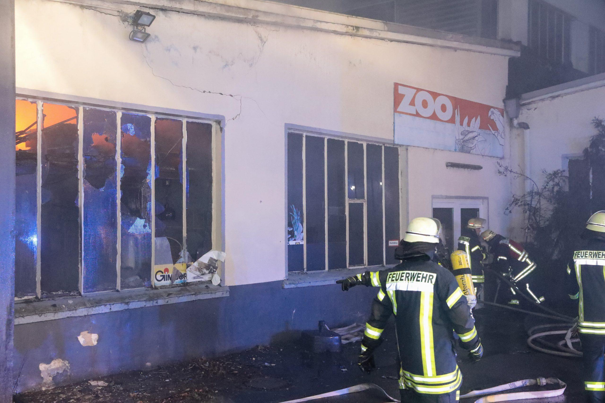 Feuer zerstört Tierhandlung